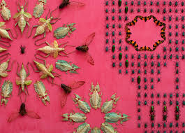 bugs adorn walls at renwick gallery in washington dc