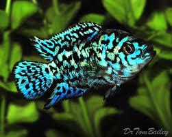 best 25 freshwater fish ideas on freshwater aquarium