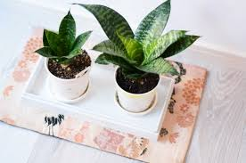 benefits of houseplants benefits of houseplants for clean air mission led blog