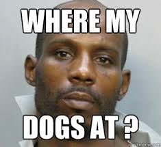 Dmx Meme - where my dogs at dmx where my dogs at quickmeme
