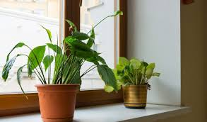 Air Purifying Plants 9 Air by 9 Power Plants That Purify The Air Health And Spices