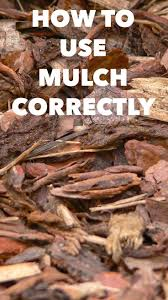 best 25 mulch landscaping ideas on pinterest sidewalk