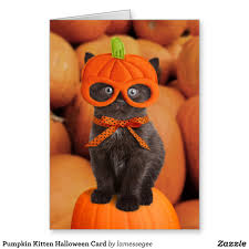 pumpkin kitten halloween card cat baby animals and animal