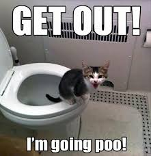 Funny Puppy Memes - 10 funny pet memes