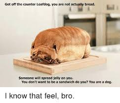 You Jelly Bro Meme - get off the counter loafdog you are not actually bread someone will