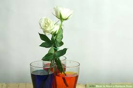 How To Make Roses Live Longer In A Vase 9 Easy Ways To Make A Rainbow Rose With Pictures