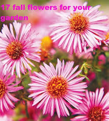 17 fall flowers for your garden fulgham u0027s inc