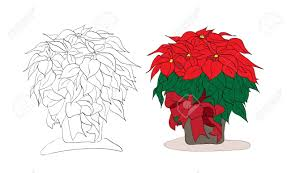 2 296 poinsettia plant stock vector illustration and royalty free