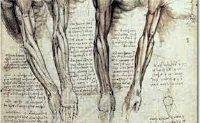Leonardo Da Vinci Human Anatomy Drawings Anatomy Archives Ua Magazine