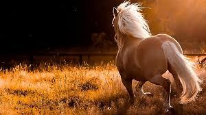 horse wallpaper hd on wallpaperget com