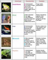 animals in primary ks1 animal learning activities ks2