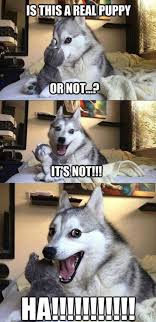 Pun Husky Meme - pun dog know your meme
