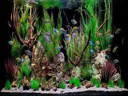 best 25 cool fish tank decorations ideas on amazing
