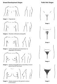 pubic hair style pics gastroenterology and clinical nutrition growth charts and