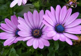different types of purple 34 different types of purple flowers for your garden purple
