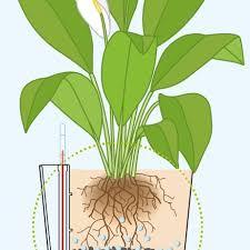 how do self watering planters work hooks u0026 lattice blog
