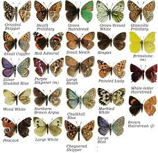 my quest to find all 59 butterflies and how i made my