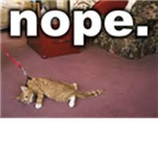 Nope Meme - cat meme nope roblox