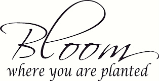 amazon com where you are planted bible verse wall decal