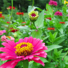 Summer Flowers For Garden - midwest gardening sizzling summer flowers