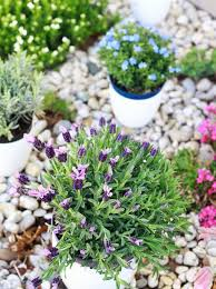 Fragrant Patio Plants - 5 fragrant plants for a small space apartment therapy