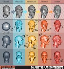 3d Head Anatomy Reference Guide Sculpting The Planes Of The Head Blender Cookie