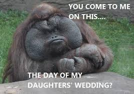 Meme Animals - the orangodfather animals know your meme