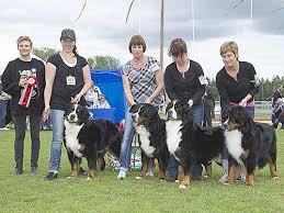 affenpinscher uppf are dalarnas kennelklubbs nationella hundutställning 2011 dalarnas