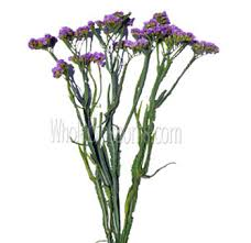 statice flowers wholesale tissue statice lavender flower online
