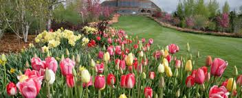 tulip festival at thanksgiving point ut places to go