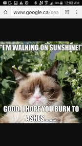 Grumy Cat Memes - 37 best grumpy cat memes images on pinterest cat memes funny