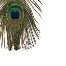 peacock feather earrings s peacock feather plume earrings tuleste
