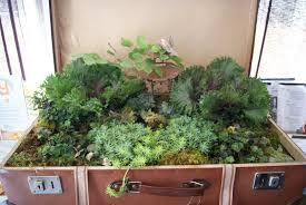 Box Garden Layout Garden Ideas In Wooden Box As Convertible Miniature Garden