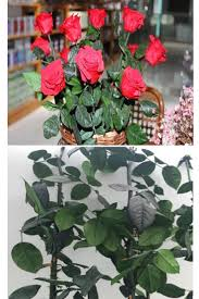 roses wholesale wholesale preserved flower bouquet with stem freeze dried
