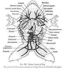 efrog anatomy study frog anatomy quiz at best anatomy learn