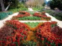 drought tolerant plants landscape design backyard flowers