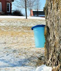 Backyard Sugaring 111 Best Tree Tapping U0026 Sap Sugaring Images On Pinterest Maple