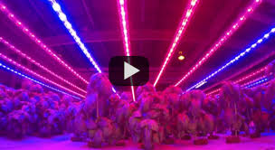 usa made led grow lights led grow light 10 year warranty independence led lighting solutions