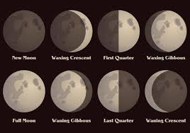 moon phases vector free vector stock graphics images