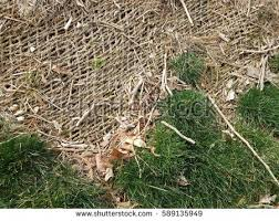 green grass landscaping fabric stock photo 589135949 shutterstock
