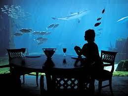 atlantis resort nassau paradise island bahamas hotel information