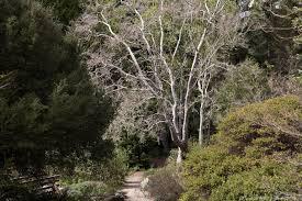 victorian native plants seeing the native plant garden photobotanic