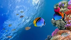 characteristics ornamental fish species aquarium fish