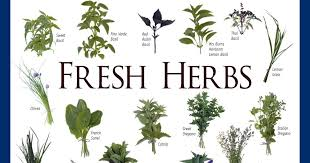 herb chart herb identification chart welcome to all things herbal