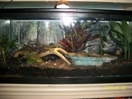 frog terrarium vivarium by pattilynn