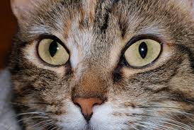 cats hunt using sight more than smell u2013 life lines