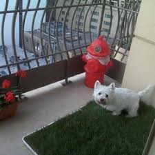Dog Patio Pet Patio Pickup 23 Reviews Pet Services 4036 N Pulaski Rd