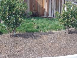 Backyard Ground Cover Ideas by Drought Tolerant Ground Cover Plants Landscaping Bay Area