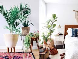 10 indoor plants that are literally impossible to kill sporteluxe