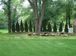 privacy trees for along the back of fence line used to hide
